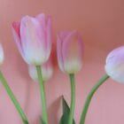 Romancing Tulips by trueblvr
