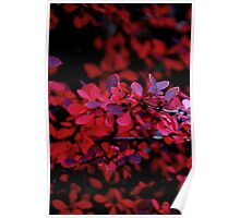 Autum Red Poster