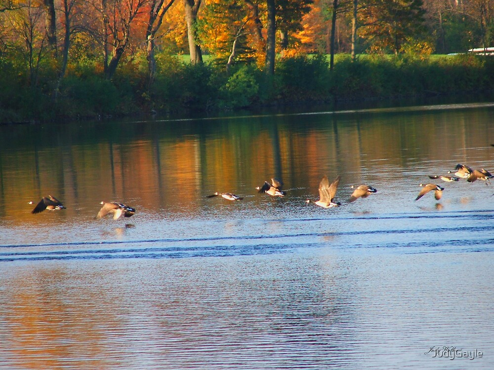 In Flight on the Lake by Judy Gayle Waller