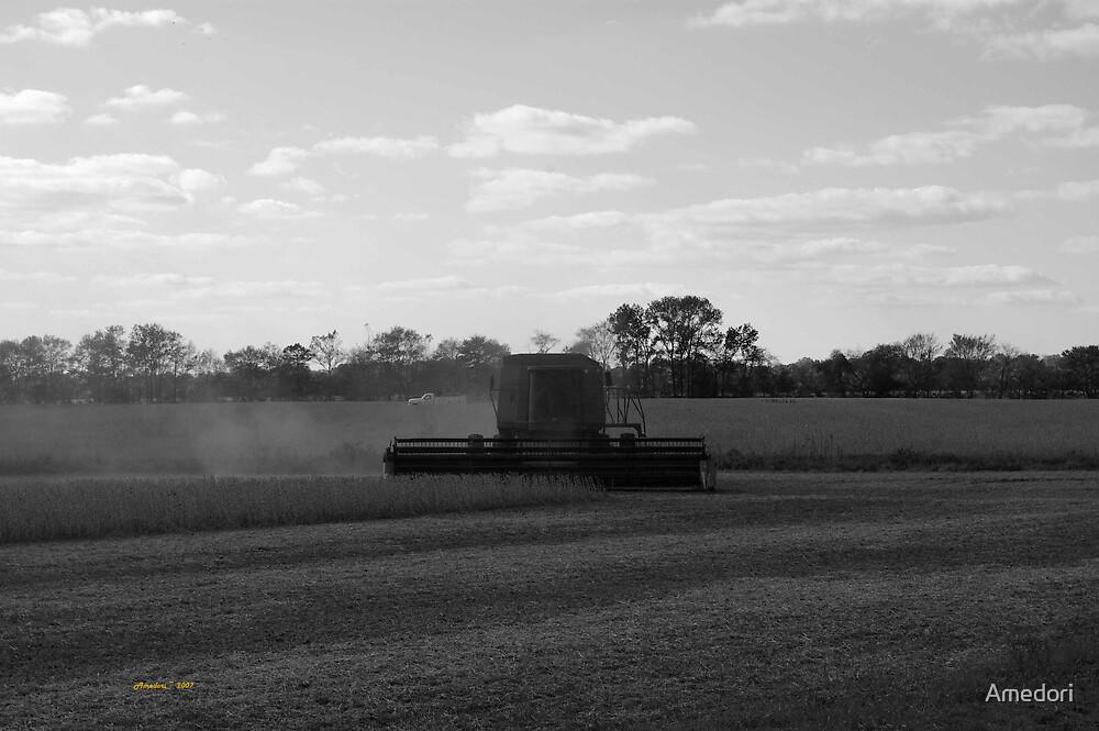 Harvesting  by Amedori
