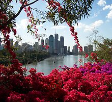 Brisbane in Bloom by Mark Hills