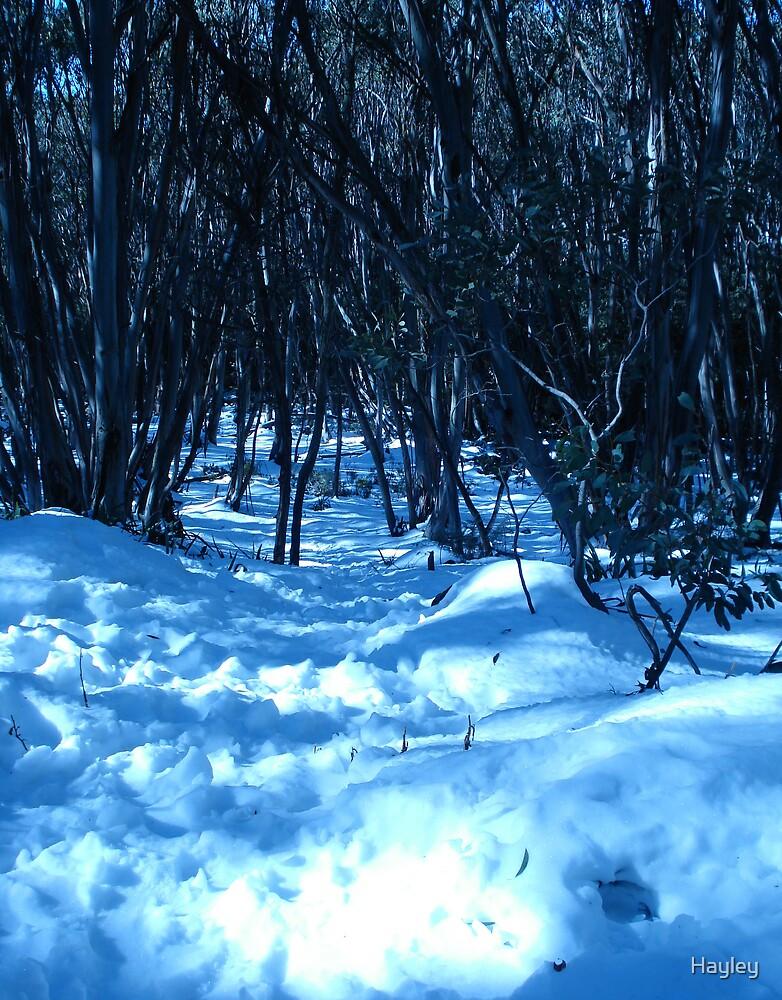 Winter Blues by Hayley