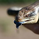 Blue-tongued lizard by robertp