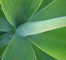 """Yucca"" Plant by Lucas82"