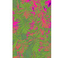 Pinkly green  Photographic Print