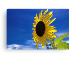 The Sun Worshiper Canvas Print
