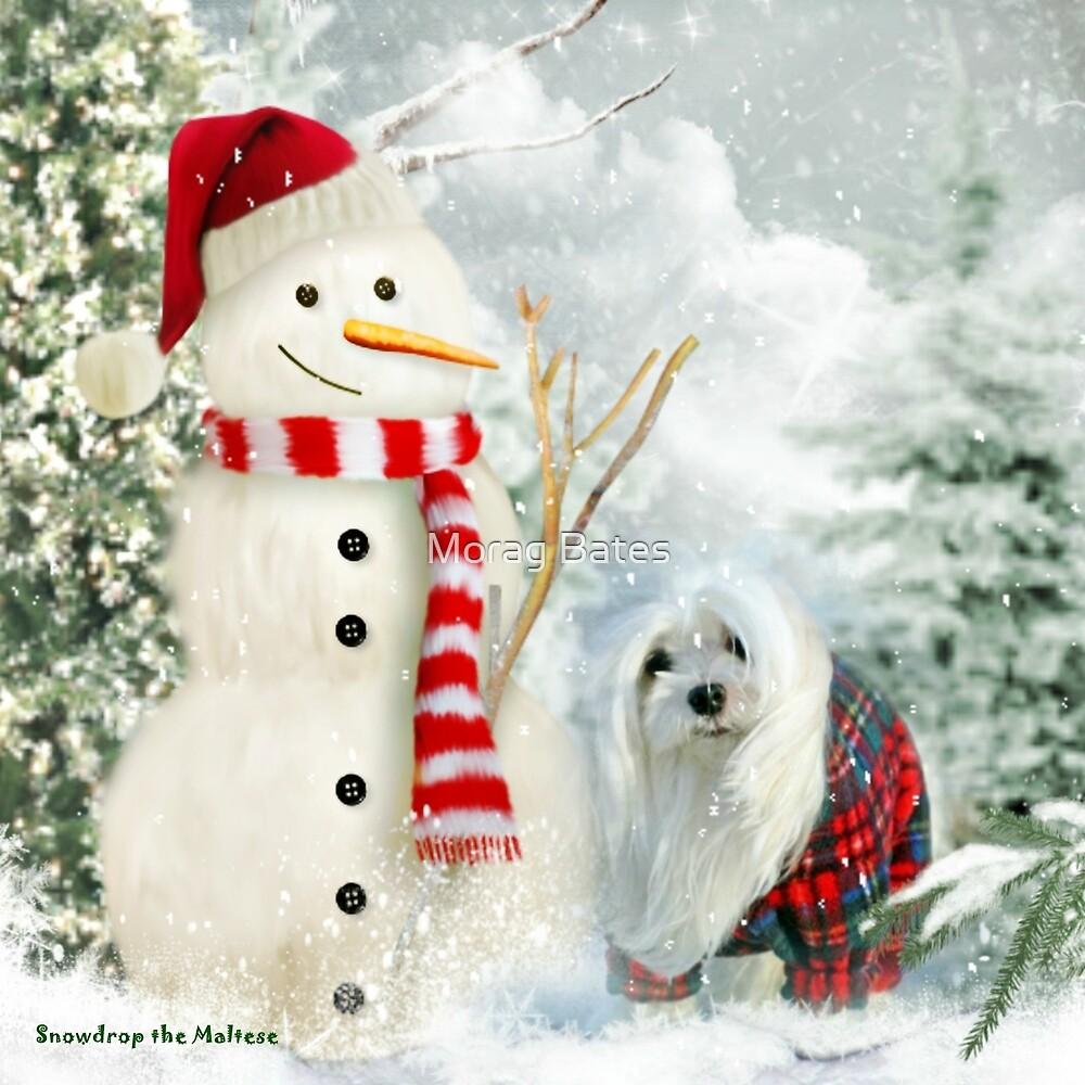 Snowdrop the Maltese & The Jolly Snowman by Morag Bates