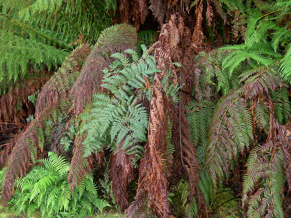 Ferns by Roslyn Slater