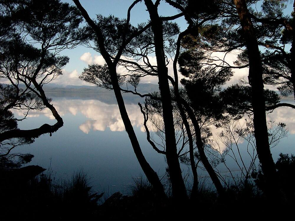 Tree Silhouette by Roslyn Slater