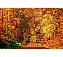 Automne is here Photographic Print