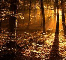 Light by Philippe Sainte-Laudy