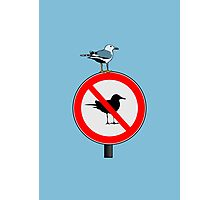 Seagull No Seagulls Sign Photographic Print