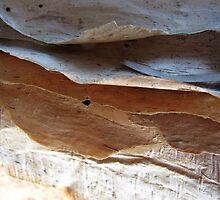 Waves In Bark by Kathie Nichols