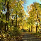 Down Autum's Road 3 by Gretchen  Mueller Steele