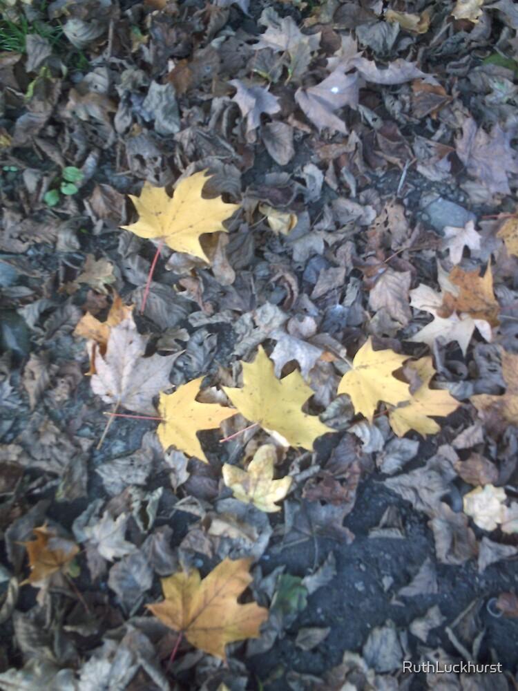 Leaves by RuthLuckhurst