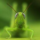 Grasshopper stare II by AnnaKT
