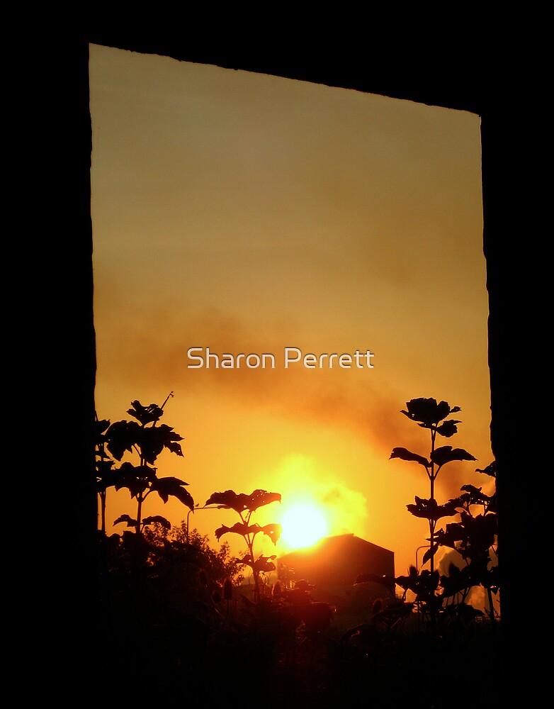 Nature's window by Sharon Perrett