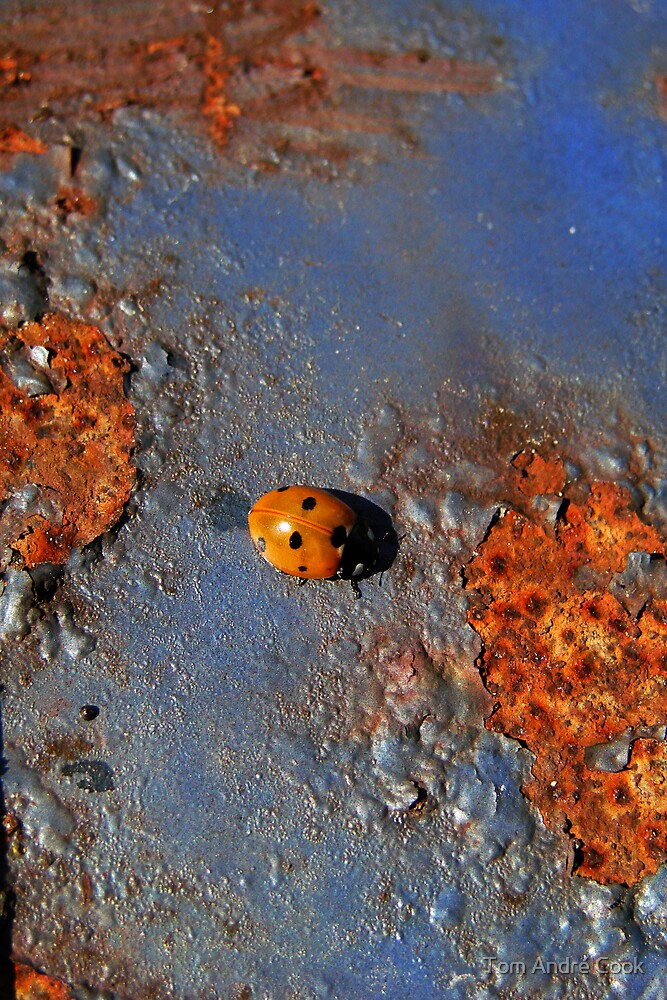 Ladybug loves rust by Tom André Cook