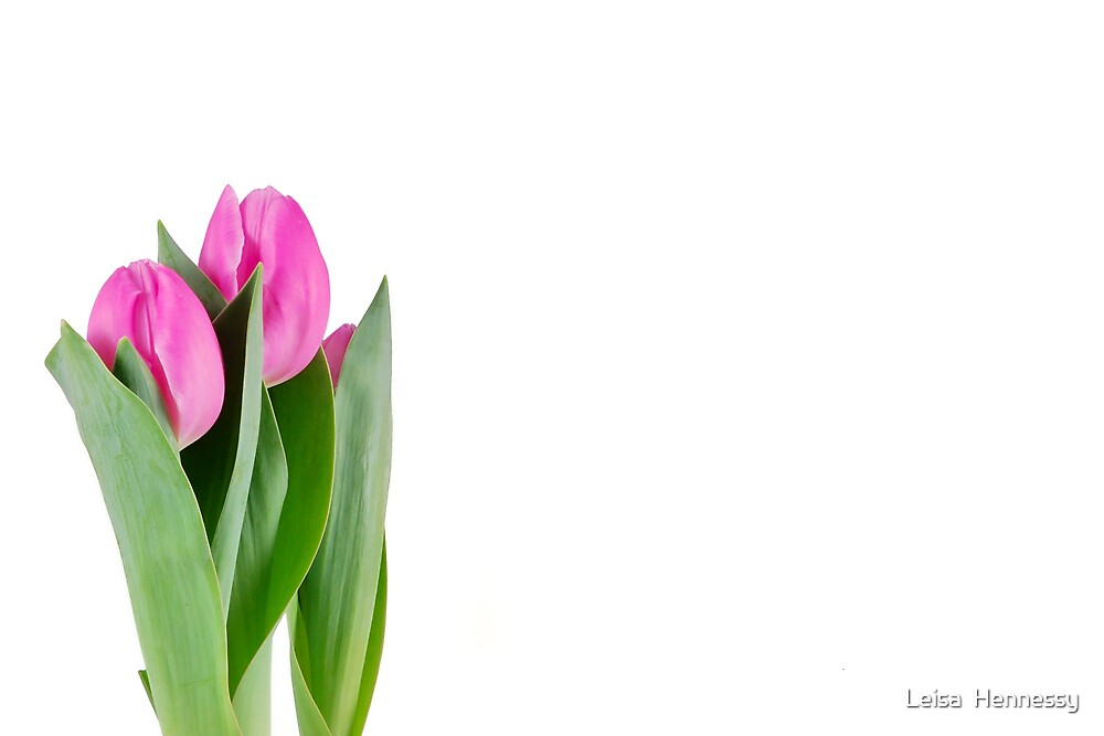 Pink Tulips by Leisa  Hennessy