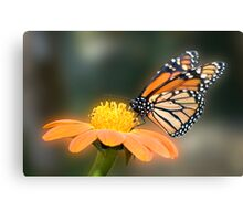 Monarch Butterfly closeup  Canvas Print