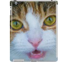 Calico Kitten iPad Case/Skin