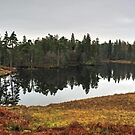 Tarn Hows,The Lake District by Jamie  Green