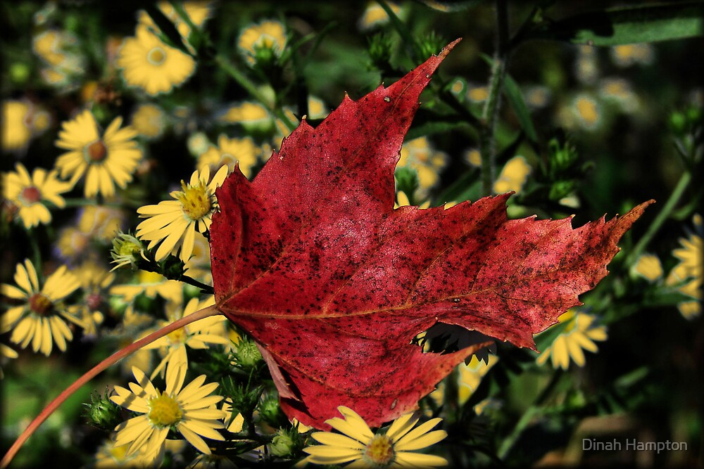 Red Fall Leaf by Dinah Hampton