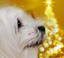 Snowdrop the Maltese - Joy to the World ! by Morag Bates
