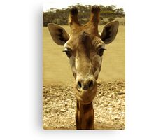 Nosey animal. Canvas Print