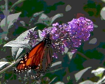 Monarch on Purple by Mary Kaderabek-Aleckson