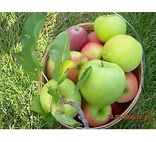 Picked Apples Photographic Print