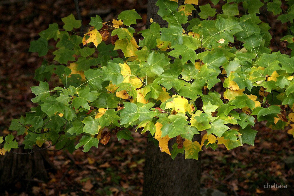 popular leaves by cheltara
