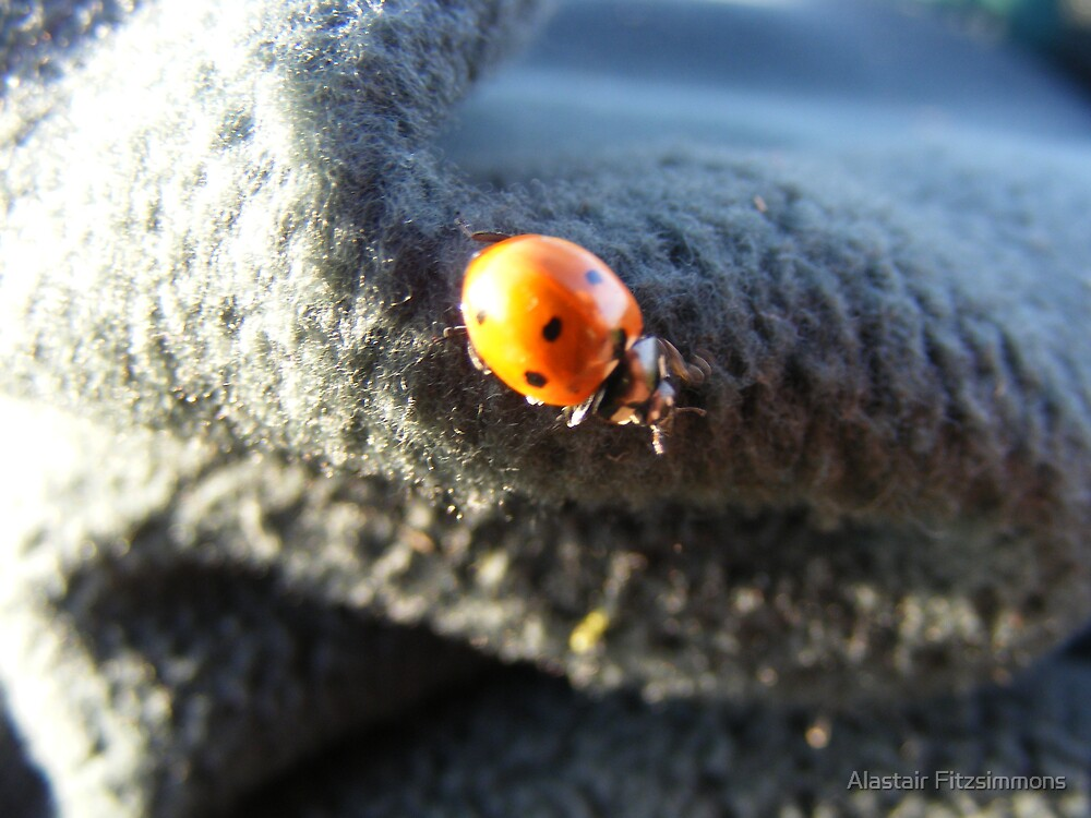 Ladybird by Alastair Fitzsimmons