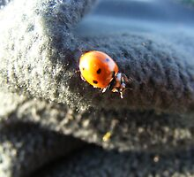 Ladybird by Alastair Fitzsimmons