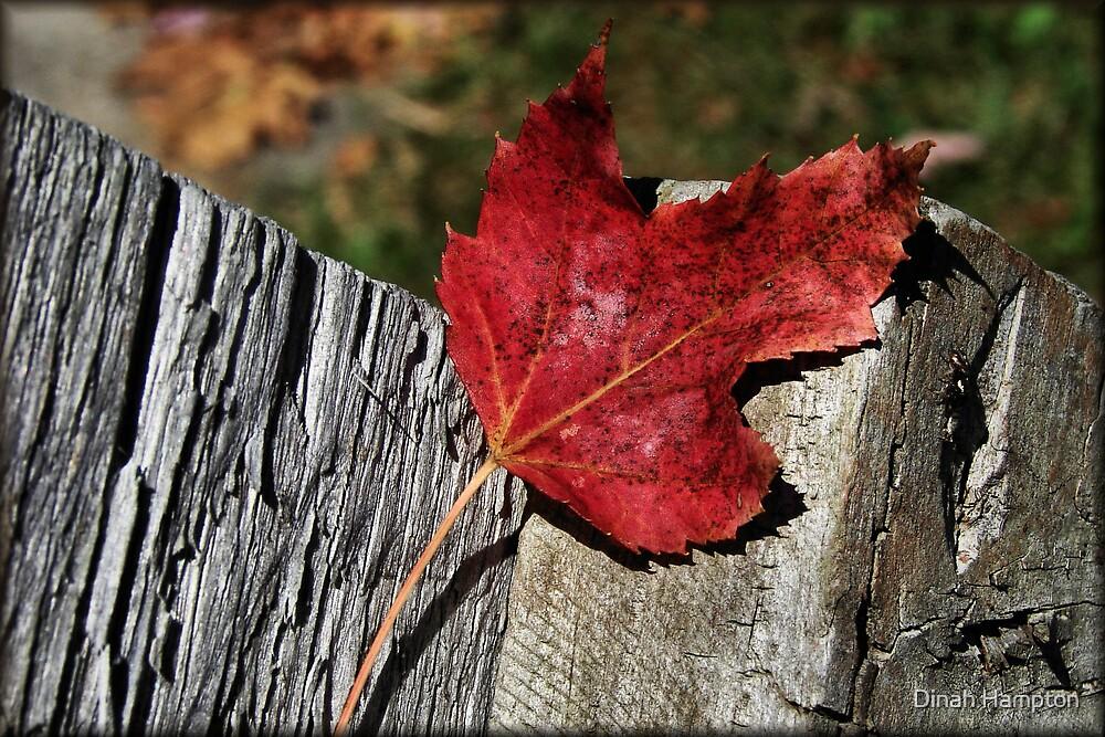 Fall where I may by Dinah Hampton