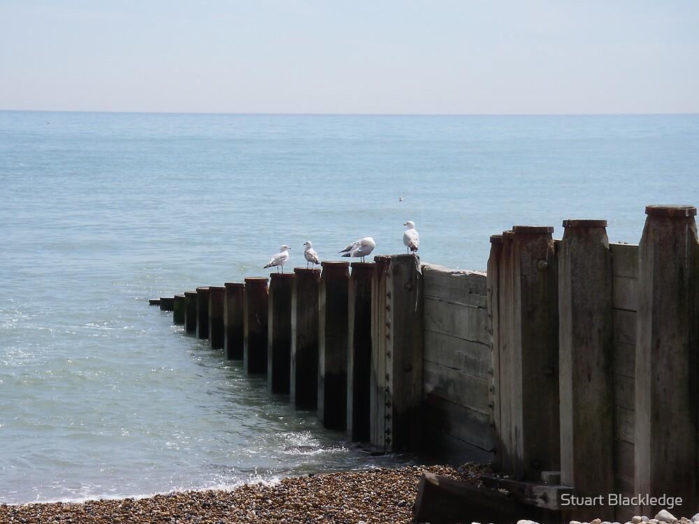 Seagulls at Eastbourne by Stuart Blackledge