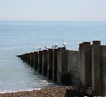Seagulls at Eastbourne by Stuart Blackledge