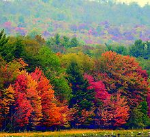 meadow ground at fall by cheltara
