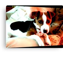 A doggy friend Canvas Print