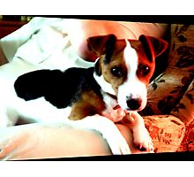A doggy friend Photographic Print