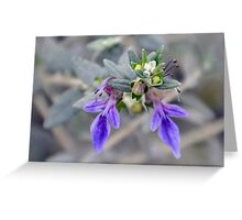 A Tiny Flower Posy........ Greeting Card