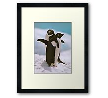 Adelies on ice Framed Print