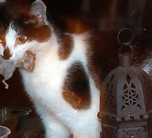 Vinny the cat with his pet mouse by TE4SE