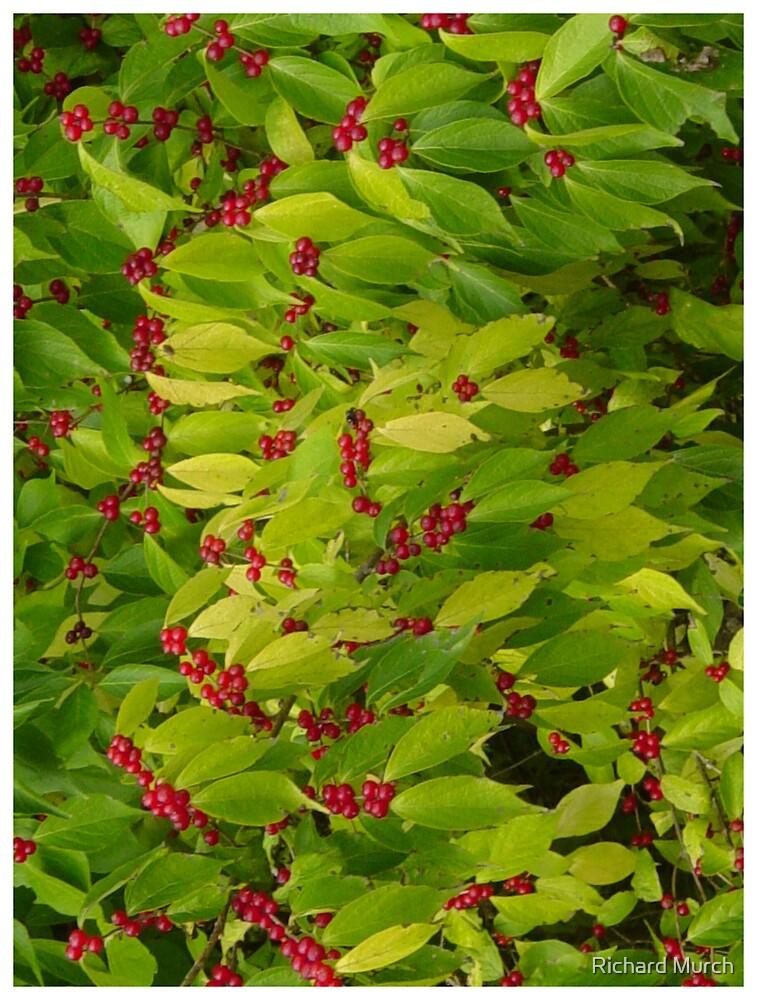 Berries by Richard Murch
