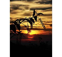Poke Berry Sunset. Photographic Print