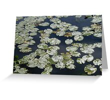 Lilies On Water Greeting Card
