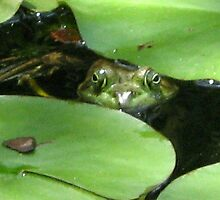 Kiss the Frog by dferreira