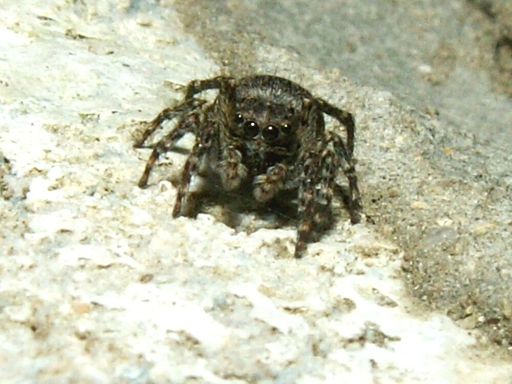 Wall spider by TE4SE