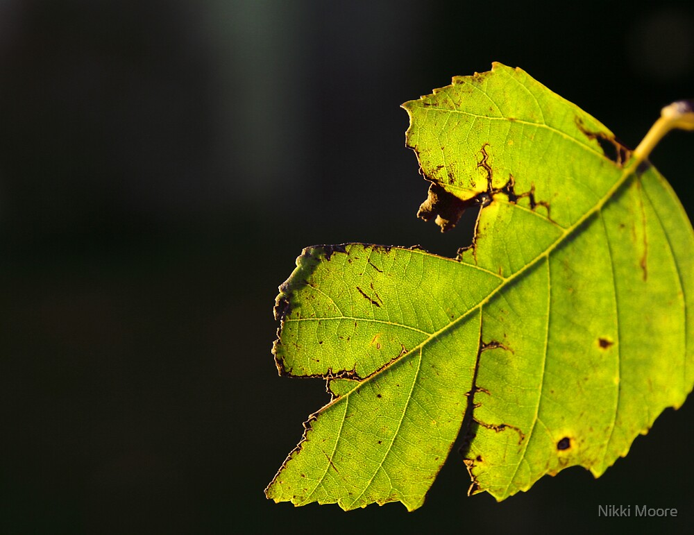 Even The Aging Still Glow by Nikki Moore