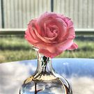 Pink rose (HDR) by Jan Clarke